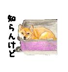 柴犬のここが好き10(個別スタンプ:4)