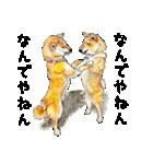 柴犬のここが好き10(個別スタンプ:7)