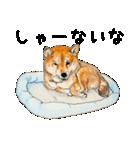 柴犬のここが好き10(個別スタンプ:8)
