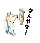 柴犬のここが好き10(個別スタンプ:9)