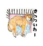 柴犬のここが好き10(個別スタンプ:12)