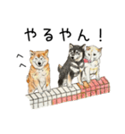柴犬のここが好き10(個別スタンプ:13)