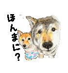 柴犬のここが好き10(個別スタンプ:14)