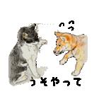 柴犬のここが好き10(個別スタンプ:15)