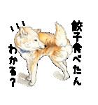 柴犬のここが好き10(個別スタンプ:17)