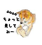 柴犬のここが好き10(個別スタンプ:19)