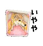 柴犬のここが好き10(個別スタンプ:20)