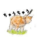 柴犬のここが好き10(個別スタンプ:27)