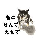 柴犬のここが好き10(個別スタンプ:32)