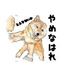 柴犬のここが好き10(個別スタンプ:36)