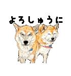 柴犬のここが好き10(個別スタンプ:37)