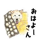柴犬のここが好き10(個別スタンプ:38)