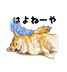 柴犬のここが好き10(個別スタンプ:39)