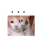クーマのスタンプ Vo.1(個別スタンプ:03)