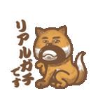 にほんの柴犬@ドロボーひげ(個別スタンプ:23)