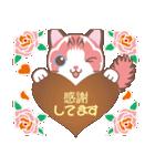 バレンタインデイ〜ふわふわのラグドール(個別スタンプ:14)
