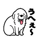 伝わるピレニーズ(個別スタンプ:01)
