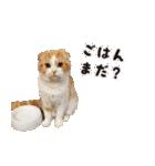 気まぐれネコのハナ(個別スタンプ:01)