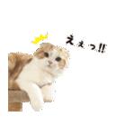 気まぐれネコのハナ(個別スタンプ:03)