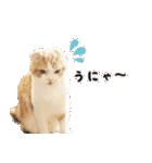 気まぐれネコのハナ(個別スタンプ:04)