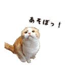 気まぐれネコのハナ(個別スタンプ:07)