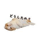 気まぐれネコのハナ(個別スタンプ:09)