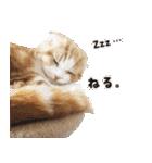 気まぐれネコのハナ(個別スタンプ:12)