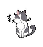 紳士な猫チョビ