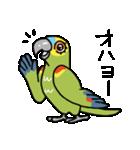 青帽子のコタくん (日本語)(個別スタンプ:01)