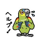 青帽子のコタくん (日本語)(個別スタンプ:13)