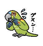 青帽子のコタくん (日本語)(個別スタンプ:15)