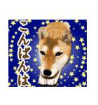 王道の犬!柴犬(個別スタンプ:05)