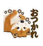 王道の犬!柴犬(個別スタンプ:08)