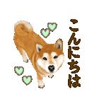 王道の犬!柴犬(個別スタンプ:13)