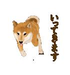 王道の犬!柴犬(個別スタンプ:21)