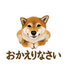 王道の犬!柴犬(個別スタンプ:24)