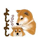 王道の犬!柴犬(個別スタンプ:31)