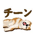 王道の犬!柴犬(個別スタンプ:36)