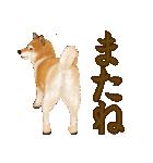王道の犬!柴犬(個別スタンプ:40)