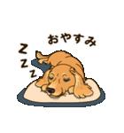 気軽にスタンプ ダックス(クリーム)(個別スタンプ:40)