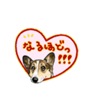 Corgi LOVE(個別スタンプ:17)