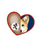 Corgi LOVE(個別スタンプ:34)