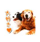 ボーダーコリー/おでか犬(個別スタンプ:03)
