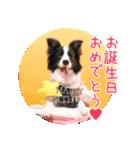 ボーダーコリー/おでか犬(個別スタンプ:04)