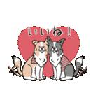 ボーダーコリー/おでか犬(個別スタンプ:05)
