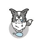 ボーダーコリー/おでか犬(個別スタンプ:06)