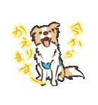 ボーダーコリー/おでか犬(個別スタンプ:12)