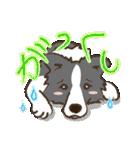 ボーダーコリー/おでか犬(個別スタンプ:13)