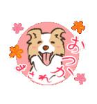 ボーダーコリー/おでか犬(個別スタンプ:14)
