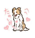 ボーダーコリー/おでか犬(個別スタンプ:15)